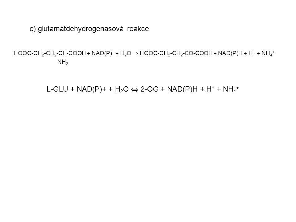 c) glutamátdehydrogenasová reakce HOOC-CH 2 -CH 2 -CH-COOH + NAD(P) + + H 2 O  HOOC-CH 2 -CH 2 -CO-COOH + NAD(P)H + H + + NH 4 + NH 2 L-GLU + NAD(P)+