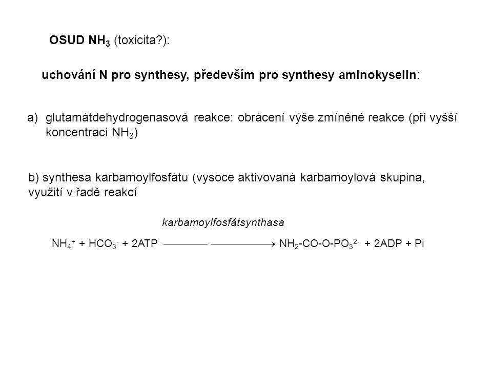 OSUD NH 3 (toxicita?): uchování N pro synthesy, především pro synthesy aminokyselin: a)glutamátdehydrogenasová reakce: obrácení výše zmíněné reakce (p