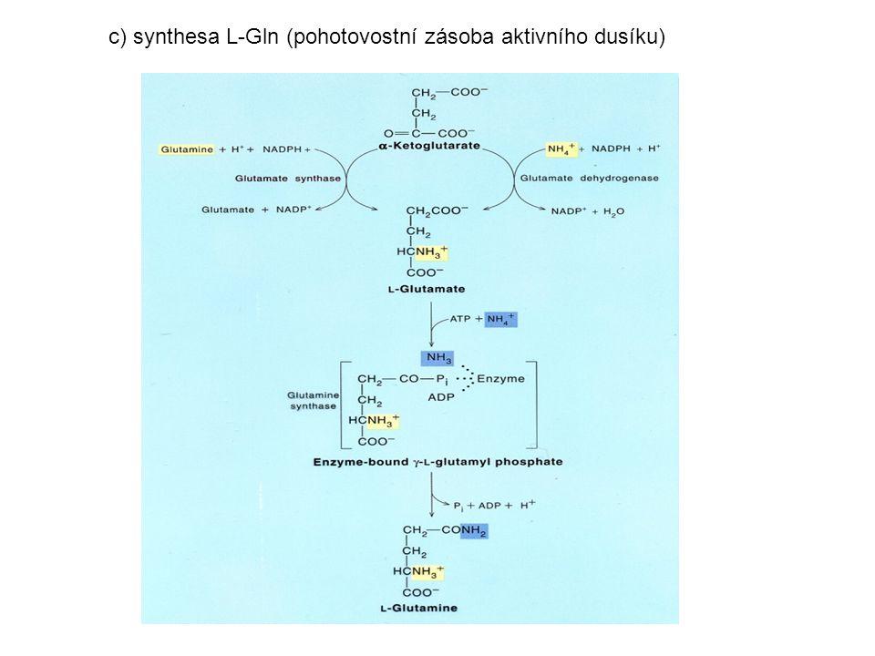 c) synthesa L-Gln (pohotovostní zásoba aktivního dusíku)