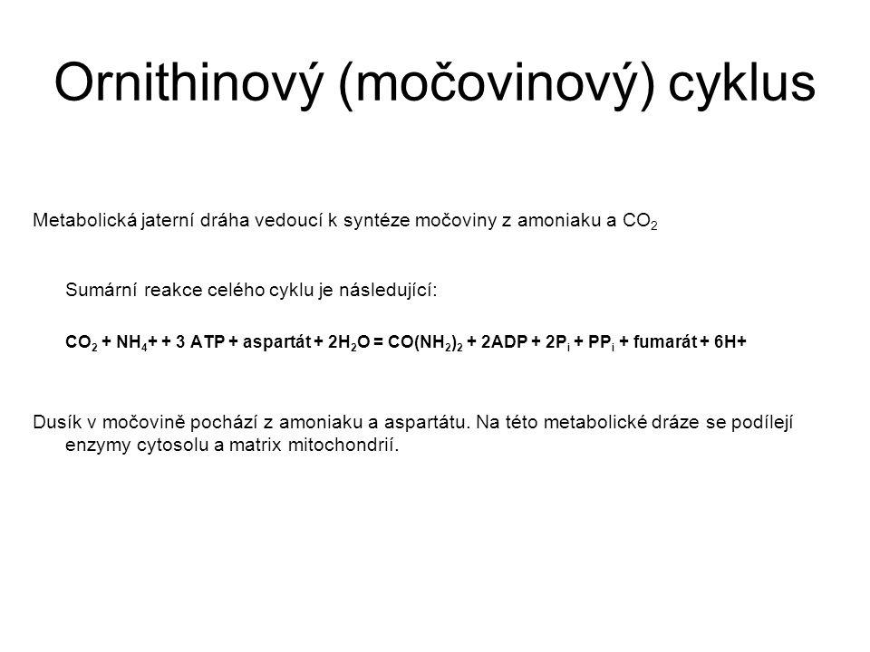 Ornithinový (močovinový) cyklus Metabolická jaterní dráha vedoucí k syntéze močoviny z amoniaku a CO 2 Sumární reakce celého cyklu je následující: CO