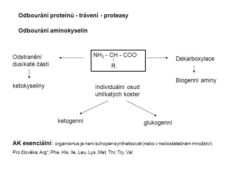 NH 3 - CH - COO - R Dekarboxylace Biogenní aminy Odstranění dusíkaté části ketokyseliny Individuální osud uhlíkatých koster ketogenní glukogenní Odbou