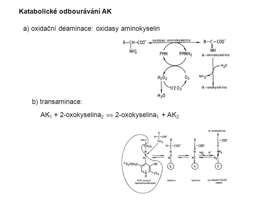 a) oxidační deaminace: oxidasy aminokyselin b) transaminace: AK 1 + 2-oxokyselina 2  2-oxokyselina 1 + AK 2 Katabolické odbourávání AK