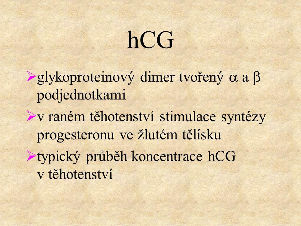 hCG  glykoproteinový dimer tvořený  a  podjednotkami  v raném těhotenství stimulace syntézy progesteronu ve žlutém tělísku  typický průběh koncentrace hCG v těhotenství