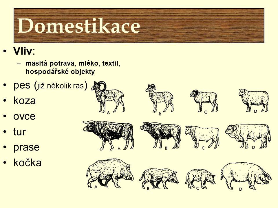 Domestikace Vliv: –masitá potrava, mléko, textil, hospodářské objekty pes ( již několik ras ) koza ovce tur prase kočka