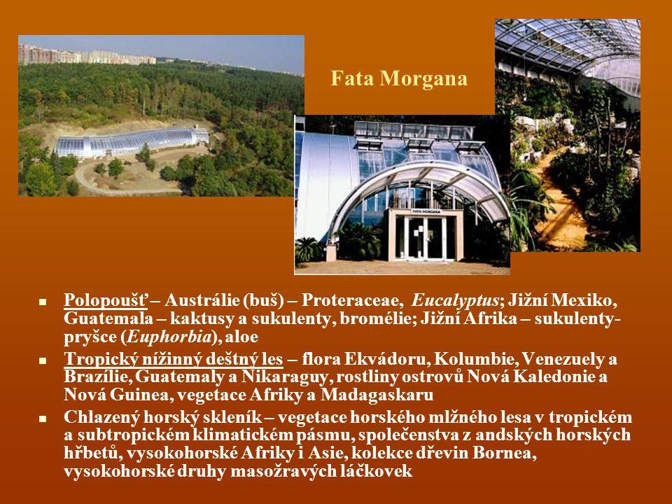 Fata Morgana Polopoušť – Austrálie (buš) – Proteraceae, Eucalyptus; Jižní Mexiko, Guatemala – kaktusy a sukulenty, bromélie; Jižní Afrika – sukulenty-
