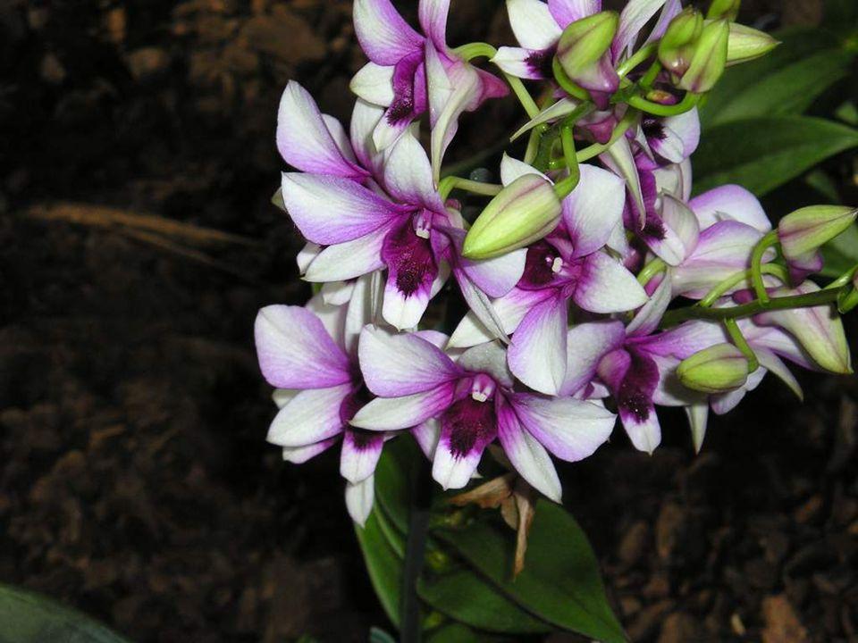 Floriade 2012 je Celosvětová zahradnická výstava, která se koná v termínu 5.