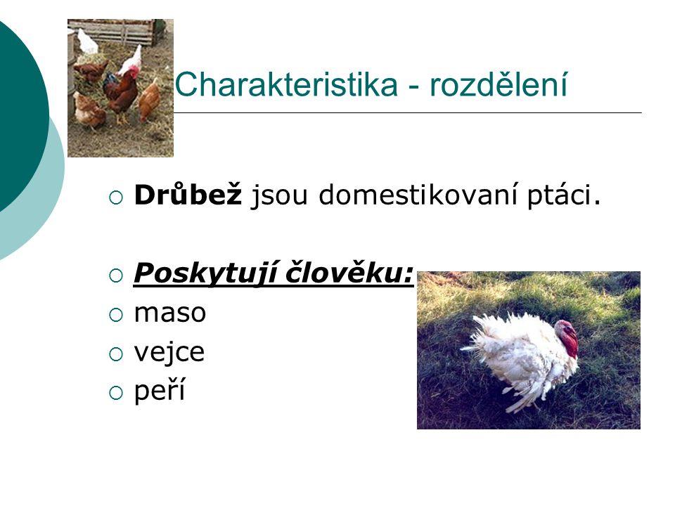 Charakteristika - rozdělení  Drůbež jsou domestikovaní ptáci.  Poskytují člověku:  maso  vejce  peří