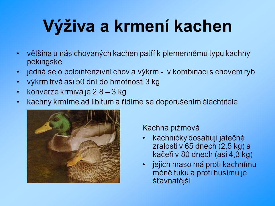 Výživa a krmení kachen většina u nás chovaných kachen patří k plemennému typu kachny pekingské jedná se o polointenzivní chov a výkrm - v kombinaci s