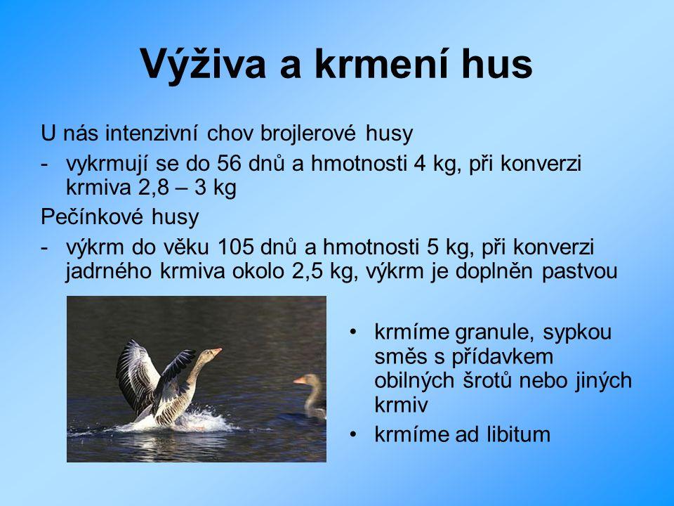 Výživa a krmení hus U nás intenzivní chov brojlerové husy - vykrmují se do 56 dnů a hmotnosti 4 kg, při konverzi krmiva 2,8 – 3 kg Pečínkové husy - vý