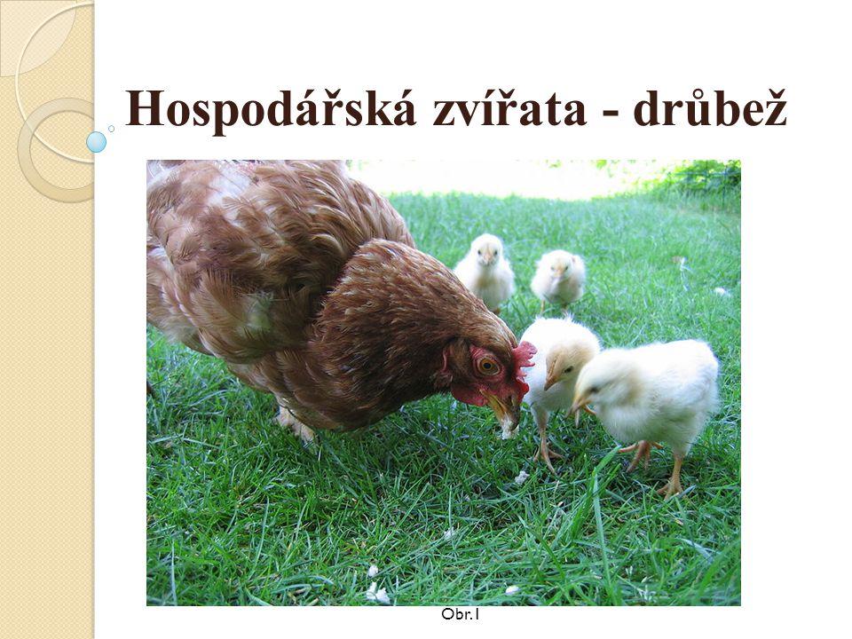 Hospodářská zvířata - drůbež Obr.1