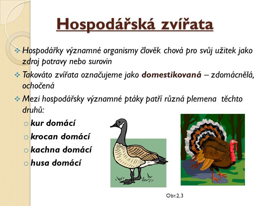 Hospodářská zvířata  Hospodářky významné organismy člověk chová pro svůj užitek jako zdroj potravy nebo surovin  Takováto zvířata označujeme jako do