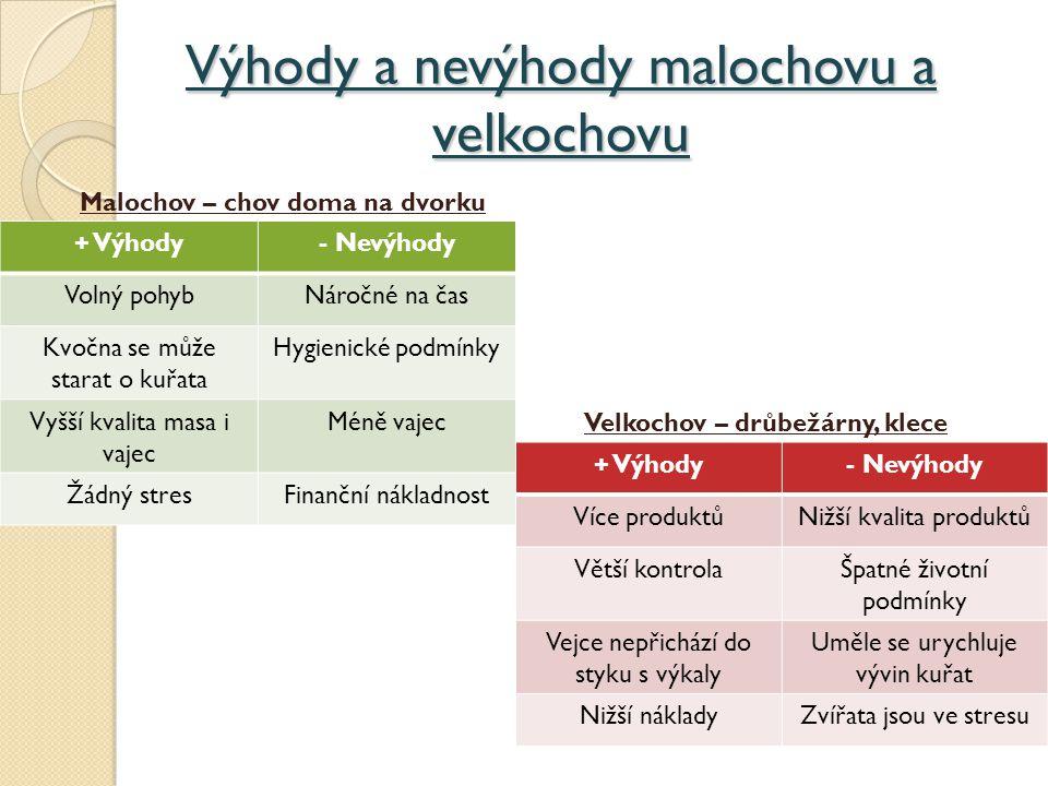 Výhody a nevýhody malochovu a velkochovu + Výhody- Nevýhody Volný pohybNáročné na čas Kvočna se může starat o kuřata Hygienické podmínky Vyšší kvalita