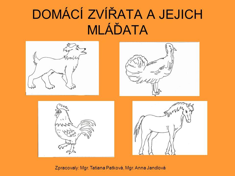 DOMÁCÍ ZVÍŘATA A JEJICH MLÁĎATA Zpracovaly: Mgr. Tatiana Patková, Mgr. Anna Jandlová