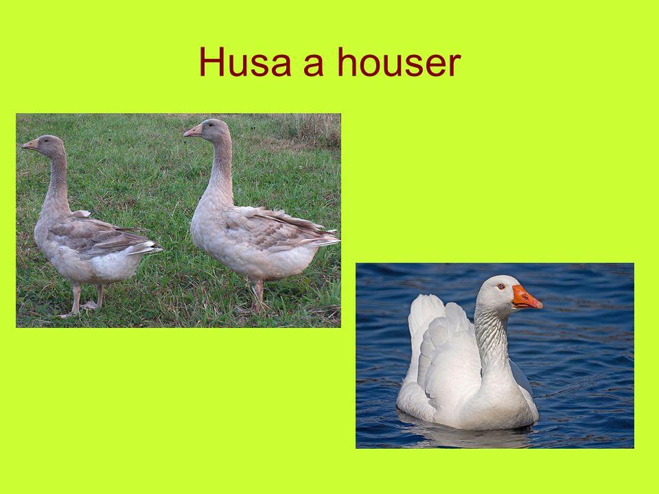 Husa a houser
