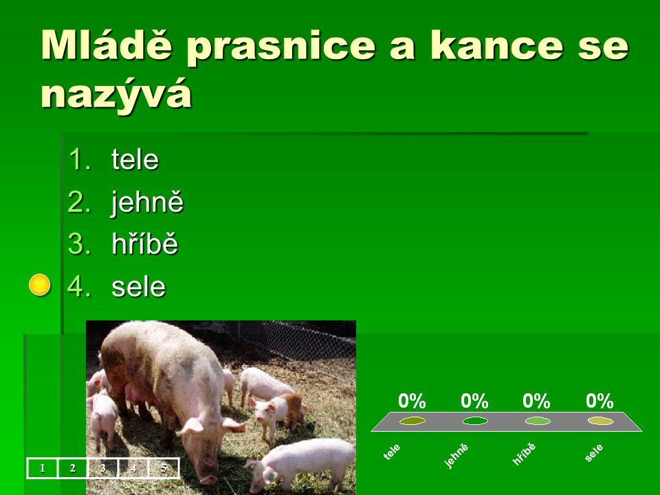Mládě prasnice a kance se nazývá 1.tele 2.jehně 3.hříbě 4.sele 12345