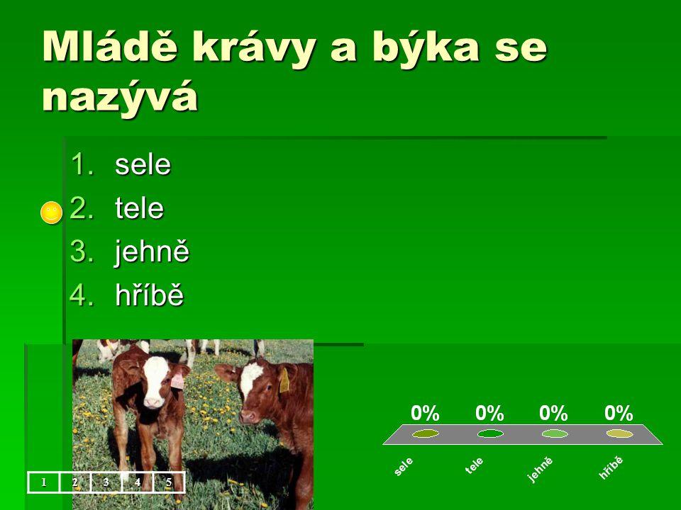 Mládě krávy a býka se nazývá 1.sele 2.tele 3.jehně 4.hříbě 12345