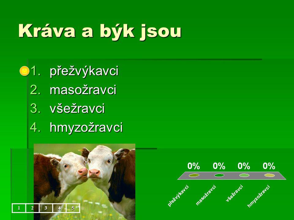 Kráva a býk jsou 1.přežvýkavci 2.masožravci 3.všežravci 4.hmyzožravci 12345
