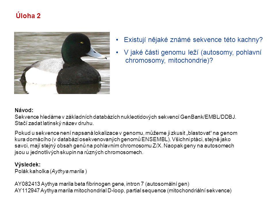 Existují nějaké známé sekvence této kachny? V jaké části genomu leží (autosomy, pohlavní chromosomy, mitochondrie)? Úloha 2 Návod: Sekvence hledáme v