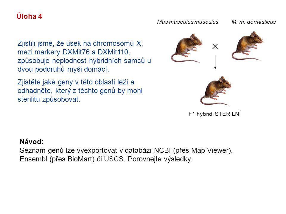 Úloha 4 Zjistili jsme, že úsek na chromosomu X, mezi markery DXMit76 a DXMit110, způsobuje neplodnost hybridních samců u dvou poddruhů myši domácí. Zj