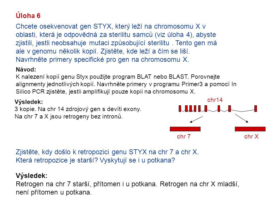 Úloha 6 Chcete osekvenovat gen STYX, který leží na chromosomu X v oblasti, která je odpovědná za sterilitu samců (viz úloha 4), abyste zjistili, jestl