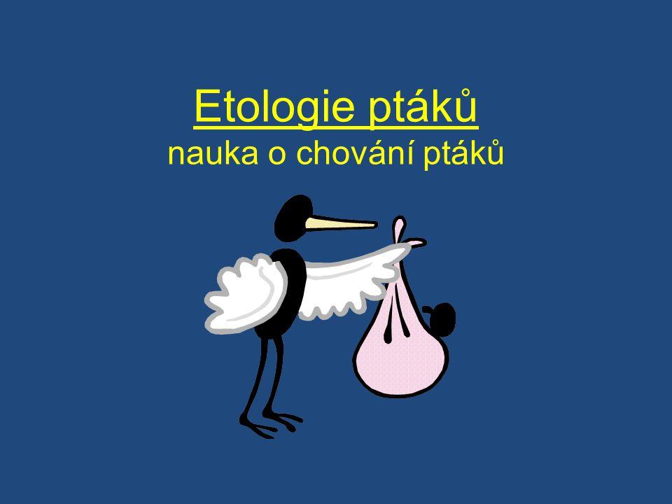 Etologie ptáků nauka o chování ptáků
