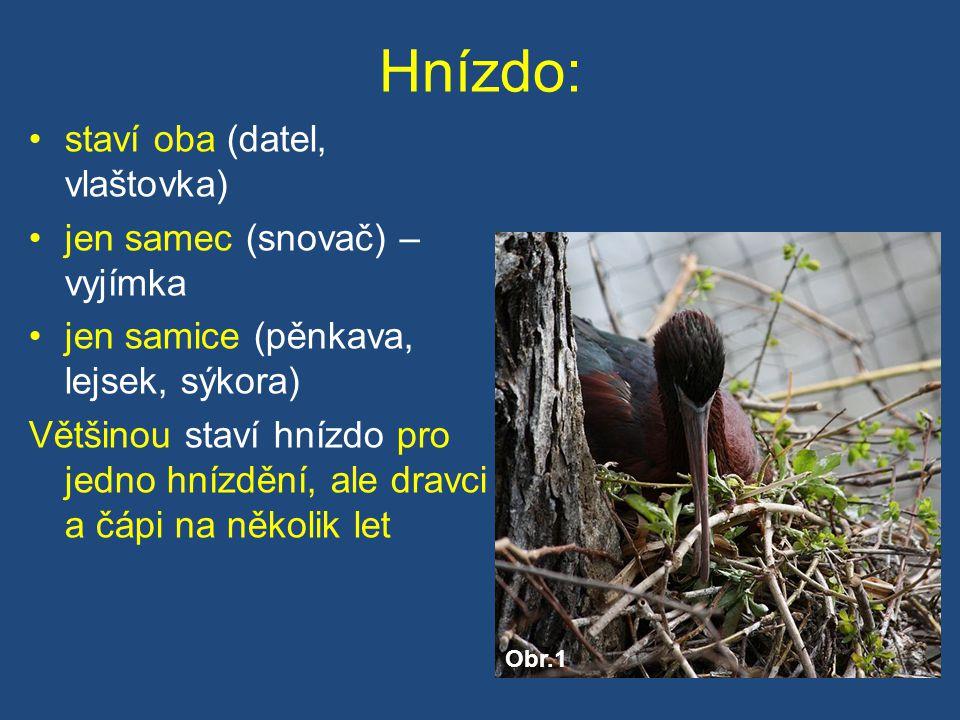 Hnízdo: staví oba (datel, vlaštovka) jen samec (snovač) – vyjímka jen samice (pěnkava, lejsek, sýkora) Většinou staví hnízdo pro jedno hnízdění, ale dravci a čápi na několik let Obr.1