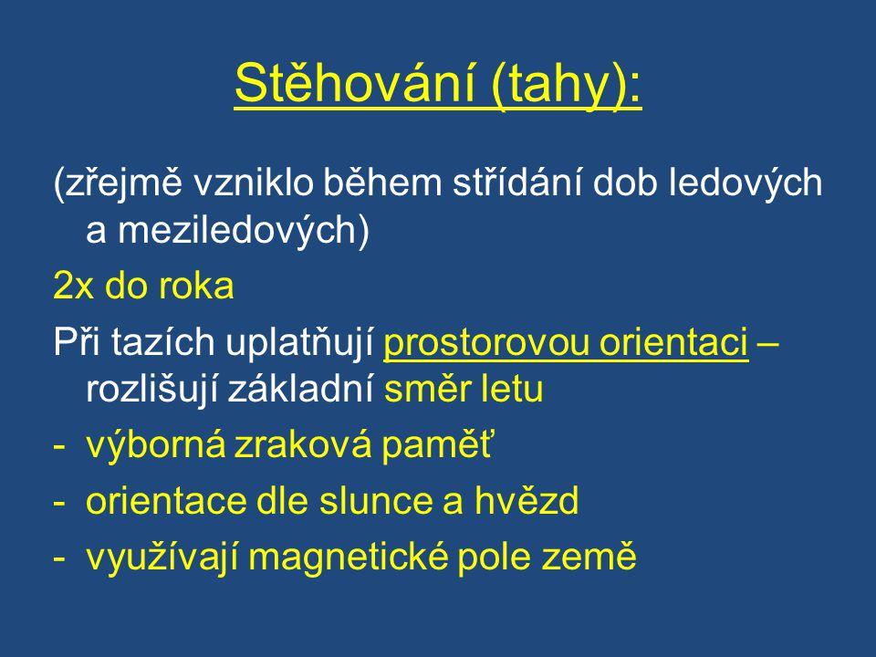 Zdroje obrázků Obr.1 http://commons.wikimedia.org/wiki/File:Plegadis_falcinellus,_ZOO_Praha_984.jpg?uselang=cs