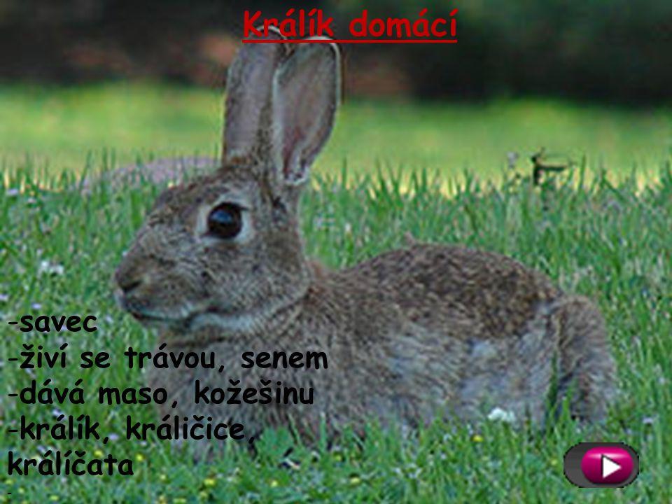 Králík domácí -savec -živí se trávou, senem -dává maso, kožešinu -králík, králičice, králíčata -
