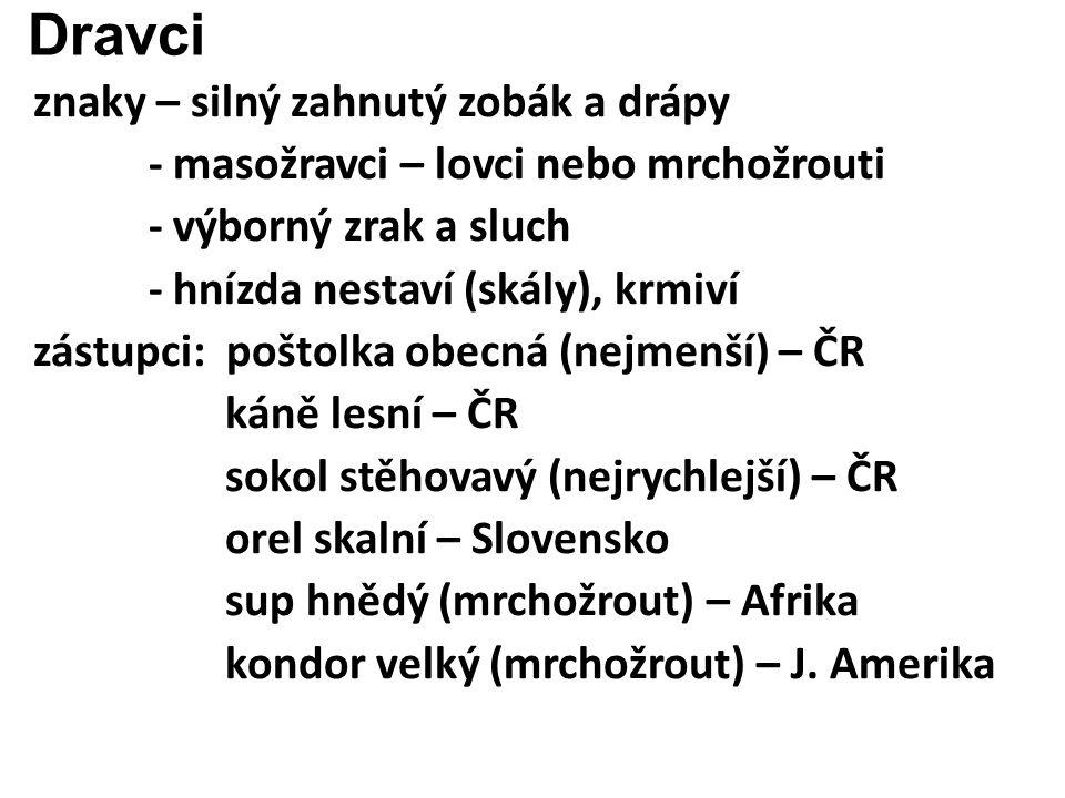 Dravci znaky – silný zahnutý zobák a drápy - masožravci – lovci nebo mrchožrouti - výborný zrak a sluch - hnízda nestaví (skály), krmiví zástupci: poštolka obecná (nejmenší) – ČR káně lesní – ČR sokol stěhovavý (nejrychlejší) – ČR orel skalní – Slovensko sup hnědý (mrchožrout) – Afrika kondor velký (mrchožrout) – J.