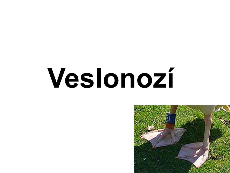 Veslonozí