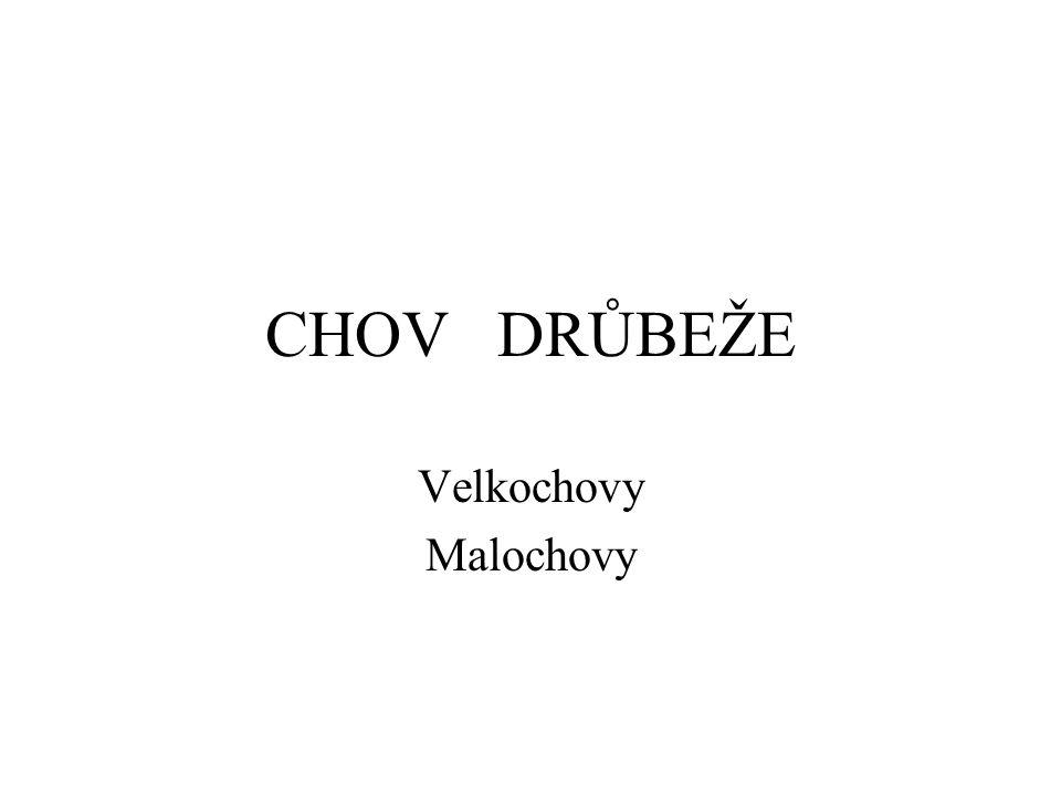 CHOV DRŮBEŽE Velkochovy Malochovy