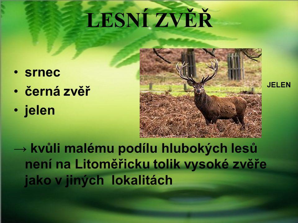 LESNÍ ZVĚŘ srnec černá zvěř jelen → kvůli malému podílu hlubokých lesů není na Litoměřicku tolik vysoké zvěře jako v jiných lokalitách JELEN