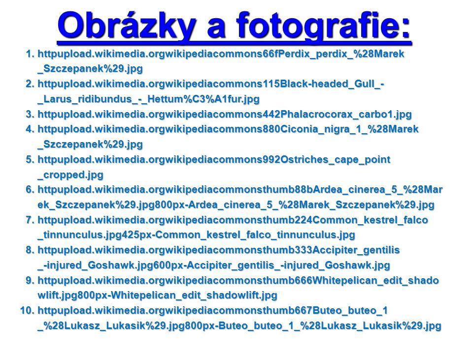 Obrázky a fotografie: 1. httpupload.wikimedia.orgwikipediacommons66fPerdix_perdix_%28Marek 1.
