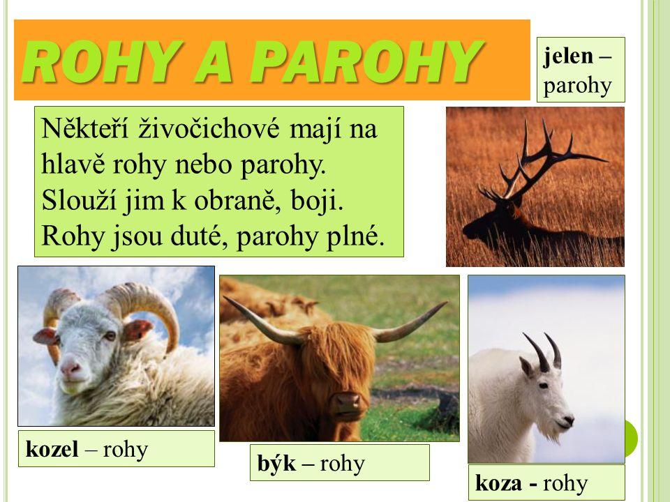 ROHY A PAROHY Někteří živočichové mají na hlavě rohy nebo parohy. Slouží jim k obraně, boji. Rohy jsou duté, parohy plné. kozel – rohy býk – rohy jele