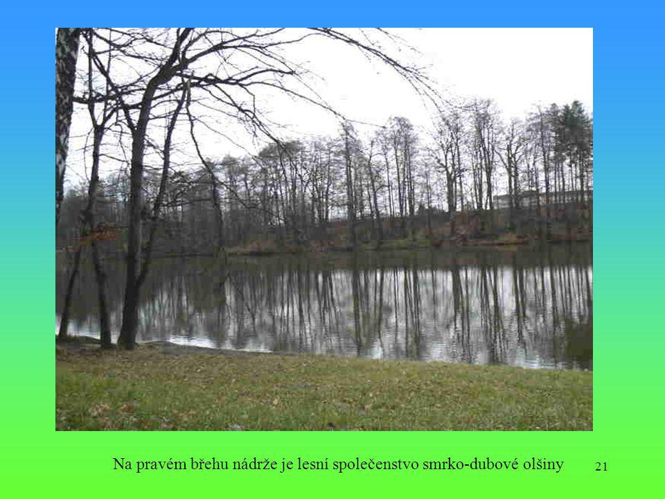 21 Na pravém břehu nádrže je lesní společenstvo smrko-dubové olšiny