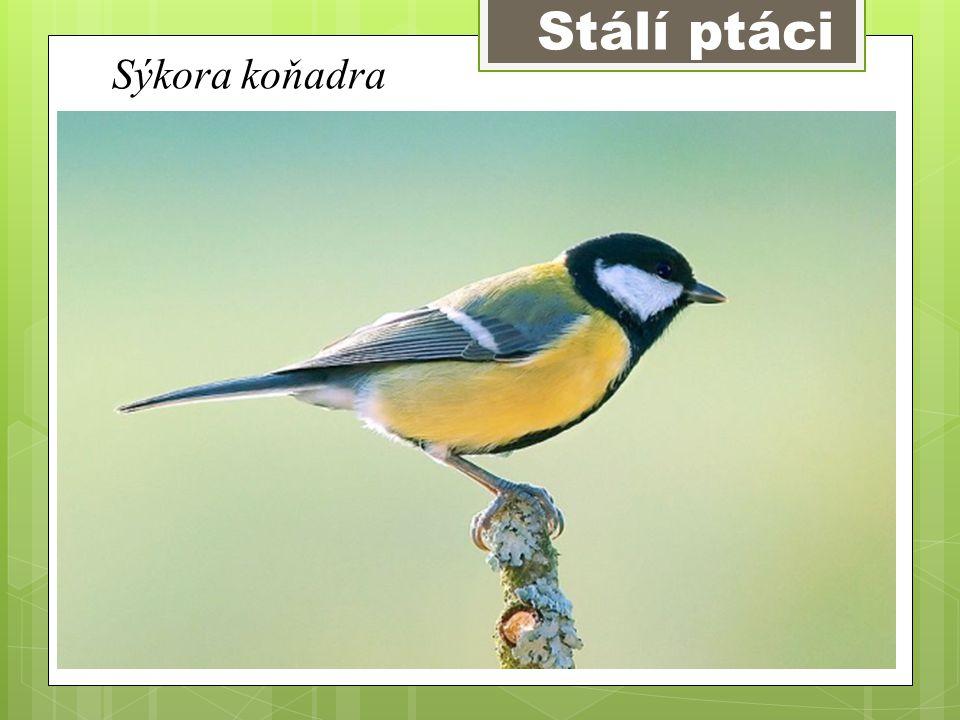 Znaky  Základní znaky ptáků jsou : Líhnou se z vajec Mají křídla a zobák Tělo je kryto peřím Mají 2 nohy
