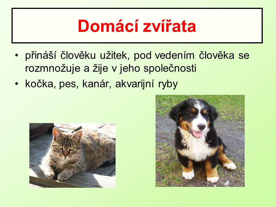 Domácí zvířata přináší člověku užitek, pod vedením člověka se rozmnožuje a žije v jeho společnosti kočka, pes, kanár, akvarijní ryby