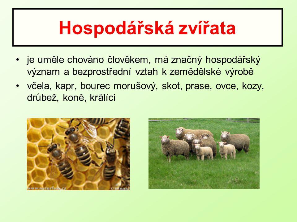 Hospodářská zvířata je uměle chováno člověkem, má značný hospodářský význam a bezprostřední vztah k zemědělské výrobě včela, kapr, bourec morušový, skot, prase, ovce, kozy, drůbež, koně, králíci