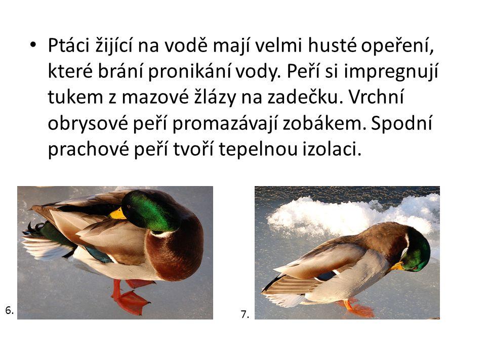 Ptáci žijící na vodě mají velmi husté opeření, které brání pronikání vody. Peří si impregnují tukem z mazové žlázy na zadečku. Vrchní obrysové peří pr
