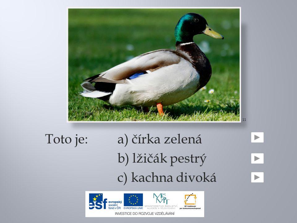 Toto je:a) čírka zelená b) lžičák pestrý c) kachna divoká 11