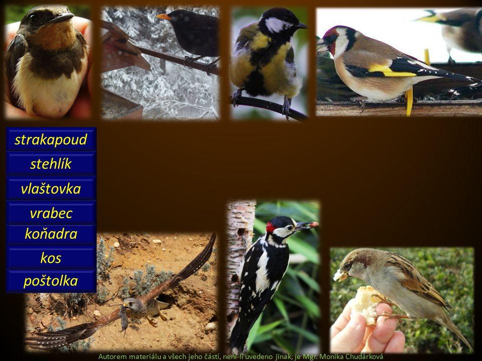 koňadra stehlík strakapoud vrabec vlaštovka poštolka kos Autorem materiálu a všech jeho částí, není-li uvedeno jinak, je Mgr.