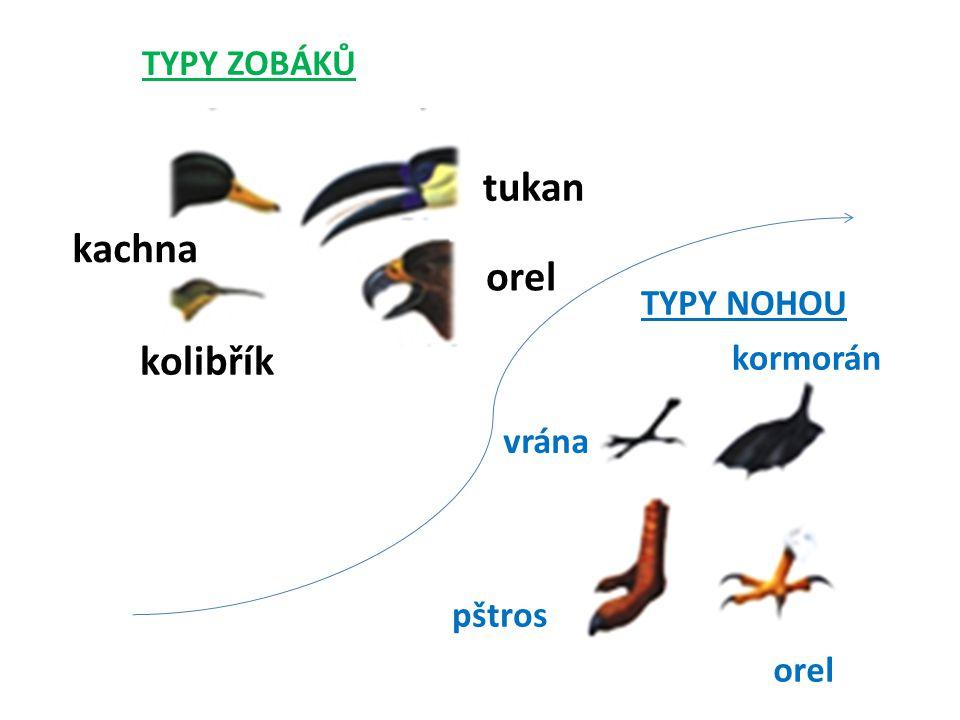 TYPY ZOBÁKŮ kachna tukan orel kolibřík TYPY NOHOU vrána pštros orel kormorán