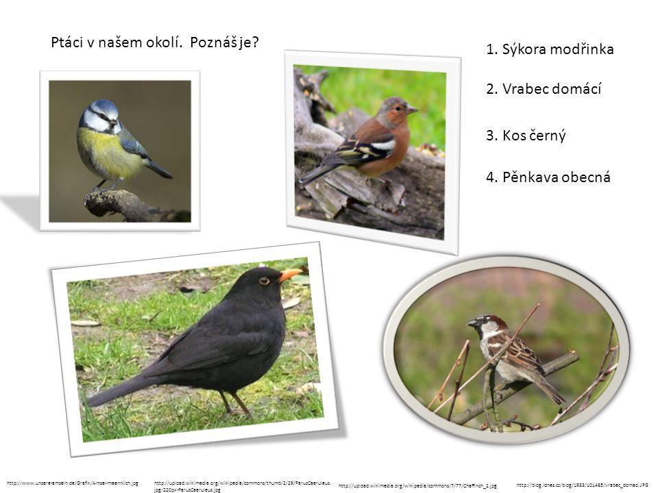Ptáci v našem okolí. Poznáš je? 1. Sýkora modřinka http://www.unsere-amseln.de/Grafik/Amsel-maennlich.jpghttp://upload.wikimedia.org/wikipedia/commons