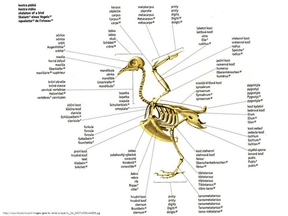 http://www.holubnik.com/images/galerie/velke/prispevky_24_20071006144606.jpg