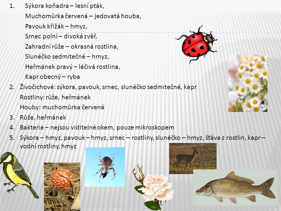 1. Sýkora koňadra – lesní pták, Muchomůrka červená – jedovatá houba, Pavouk křižák – hmyz, Srnec polní – divoká zvěř, Zahradní růže – okrasná rostlina