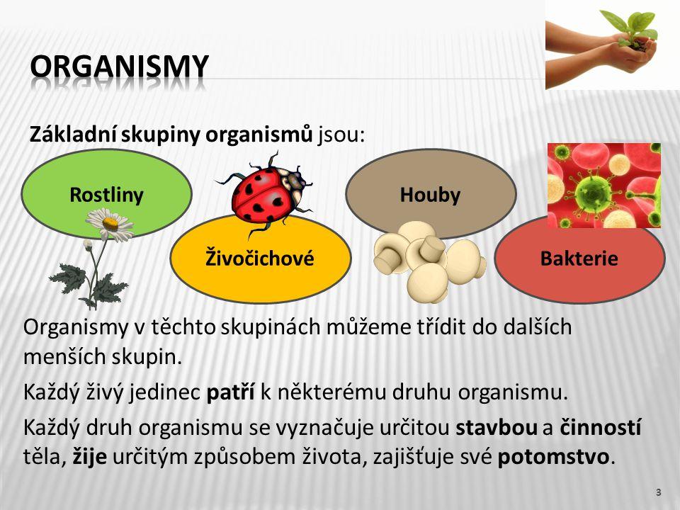 Základní skupiny organismů jsou: 3 Organismy v těchto skupinách můžeme třídit do dalších menších skupin.