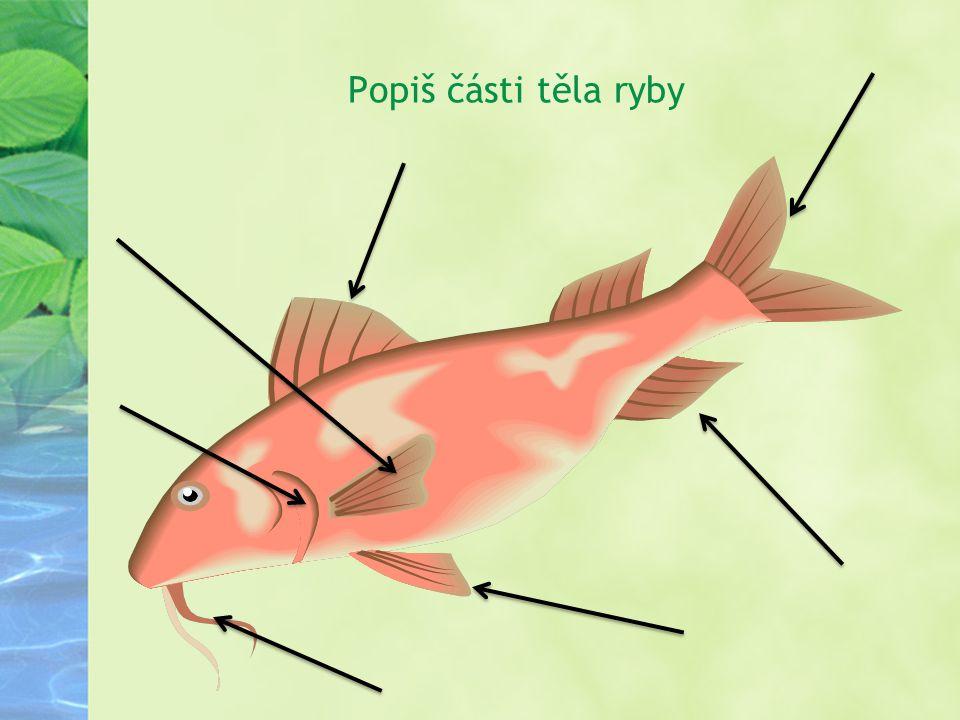 Popiš části těla ryby