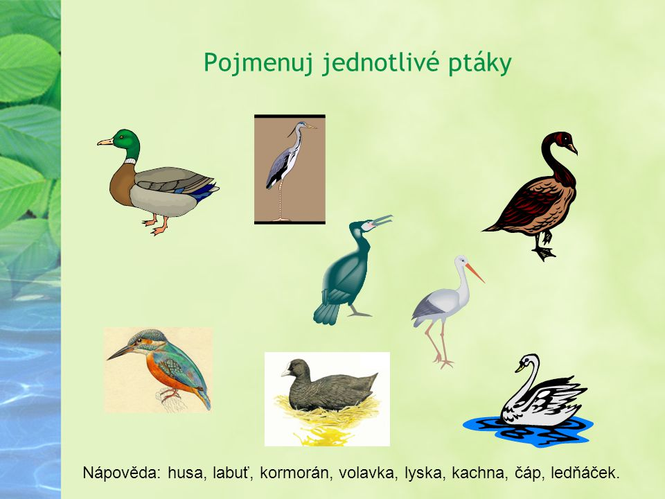 Pojmenuj jednotlivé ptáky Nápověda: husa, labuť, kormorán, volavka, lyska, kachna, čáp, ledňáček.