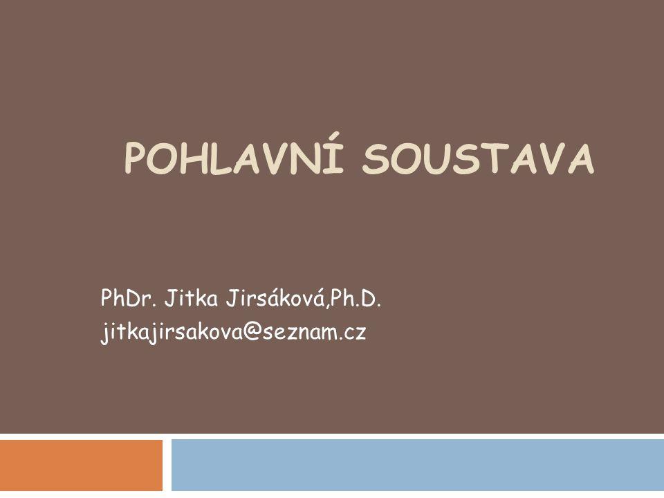 POHLAVNÍ SOUSTAVA PhDr. Jitka Jirsáková,Ph.D. jitkajirsakova@seznam.cz