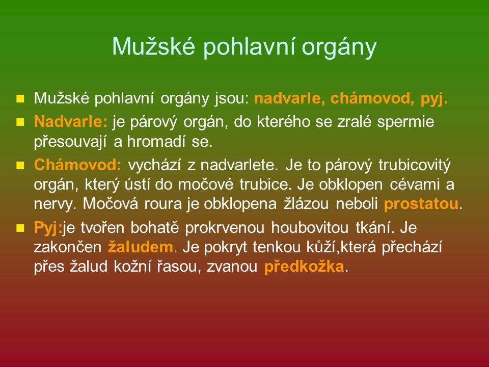 Mužské pohlavní orgány Mužské pohlavní orgány jsou: nadvarle, chámovod, pyj. Nadvarle: je párový orgán, do kterého se zralé spermie přesouvají a hroma